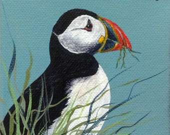 Puffin. Colourful seabird. Puffin nesting