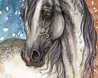 Grey arabian horse watercolor painting