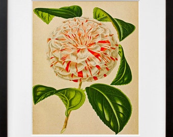 Flowers Print Vintage Botanical Art Illustration