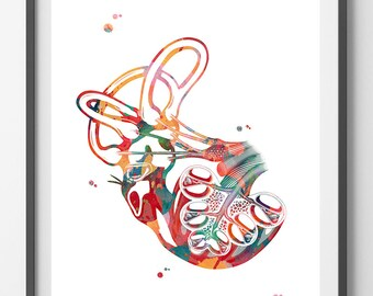 Cochlea of Inner ear watercolor print anatomy art vestibular system inner ear structure cochlea poster cochlea print audiology poster