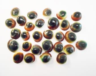 "Bulk 100 Green Cat Eye Shells (Shiva Shells) Operculum - small: 1/2"" - 1"" - for Crafts and Nautical Beach Cottage Decor"