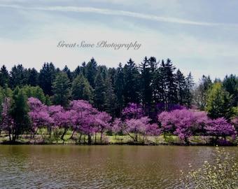 Purple Lake, Photography, Home Decor