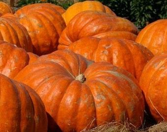 Cucurbita / Giant Pumpkin - 10 Seeds F28