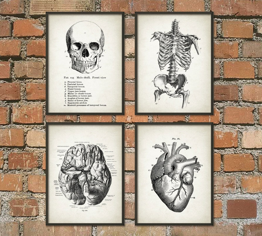 Human Anatomy Wall Art Poster Set of 4 - Antique Anatomy Prints - Vintage Skull Skeleton Brain and Heart Wall Art Posters (Q20)