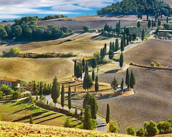 Landscape Photo, Tuscany Italy, Cypress Trees Lining Road, Montichiello Landscape, Tuscan Wall Decor, Cypress Trees Print, Fine Art Photo
