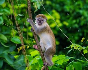 Monkey great  esacpe