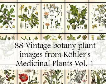 The entire set of 88 Plant illustrations in Köhler's Medicinal Plants volume 1 - High Res Printable Download - Vintage Botanical Plates