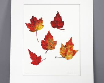Maple Leaves in Fall, Botanical Art Print