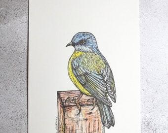 Eastern Yellow Robin - Original A5 portrait illustration