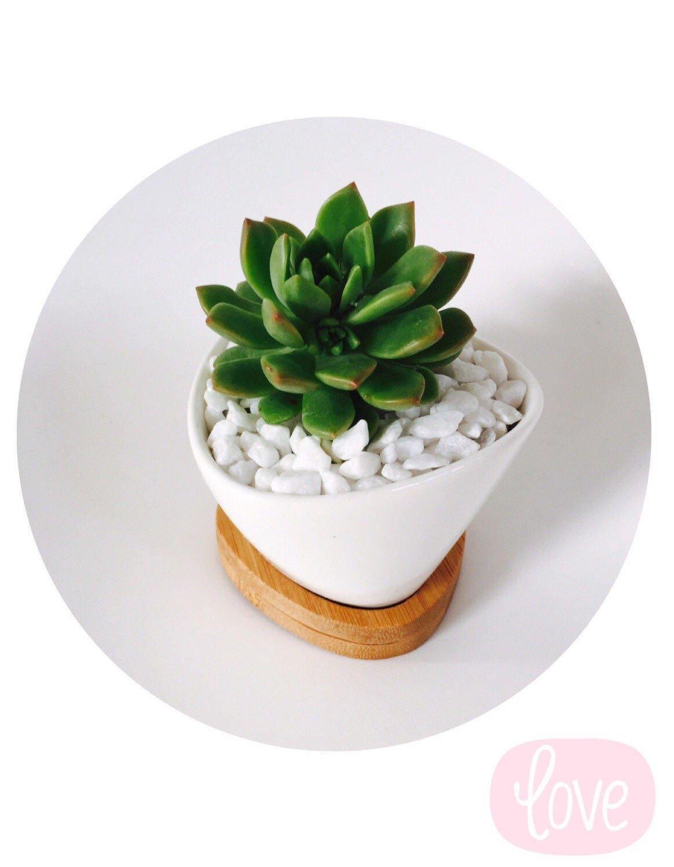 Oval Ceramic Pot Succulent Modern Wedding Wedding Favours