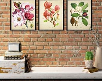 Magnolia Botanical Print Set, Botanical Three Print Set, Home Decor, Vintage  Illustrations, Magnolia Art Reproductions, 3 Print Set m014