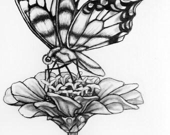 Original Butterfly Flower Pencil Drawing - 71 Butterfly