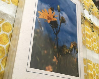 Greeting Card Set - 5pk Pollinators