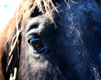 Horse Portrait - Dark Horse Closeup Photograph - The Eye of An Animal - Equine Art - Thoroughbred Photos