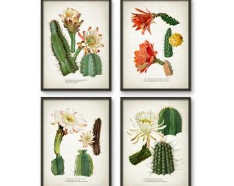 Cactus Print Set Of 4 - Vintage Cactus Illustration - Cacti Wall Art - Botanical Home Decor - Antique Cactus Book Plate Illustration - AB548