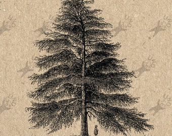 Image Tree Pine Instant Download picture Digital printable vintage clipart graphic Stickers Burlap Fabric Transfer Iron On Pillows HQ 300dpi