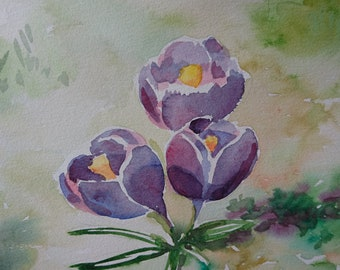 Lilac crocus spring flower
