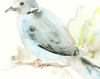 Bird Art Print from Original Watercolor Painting Little Grey Dove