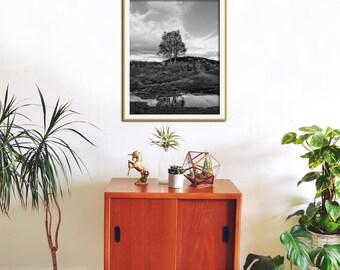 Tree Art Print, Black and White Photography, Tree Wall Art, Nature Photography, Black and White Wall Art, Tree Print, Large Tree Art