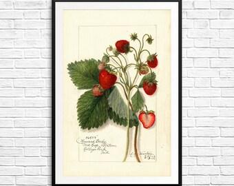 Strawberry prints, strawberry artwork, strawberry decor, strawberry art, nursery art set, large wall art, vintage home decor, fruit prints