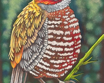 """Beautiful Bird 15 - an 8 x 10"""" ART PRINT of a fluffy chubby whimsical bird with wonderfully bright red and yellow plummage gently perched"""