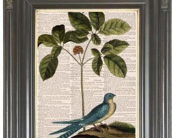 Blue bird Wildflower print on dictionary or music page Dictionary art print Wall decor Sheet music print Digital print No 634