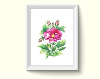 Rose Flower Watercolor Painting Poster Art Print P397