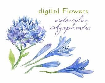 Digital Clipart, Watercolor Flowers, Flower Clipart, Agaphantus, blue, violet