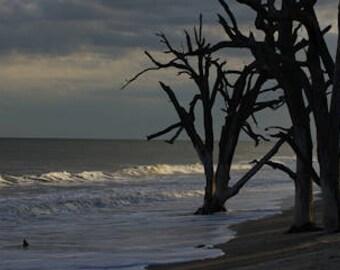 Photography, Photography print, Landscape print, nature print, beach print, Botany Bay Boneyard Beach Afternoon Storm, Edisto SC - 55001002