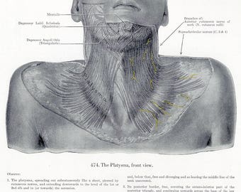 Platysma Front View & Median Front of the Neck on the Reverse Side of the Page from Grant's Human Anatomy Atlas to Frame, Paper Arts PSS3138