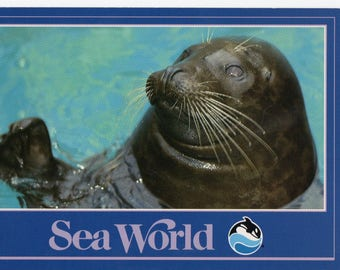 Sea World Seal 1989 Vintage Postcard