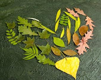 Dried leaves mix set Card making Herbariu DIY Craft supply Scrapbooking dried flower arrangement Flower Arrangement greened yellow dry leaf
