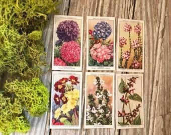 Floral Cigarette Trading Cards, Vintage Scrapbooking, Vintage Prints, Garden Decor, Floral Prints