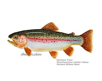 Fish Rainbow Trout  (Print 11x14) fish fly fisherman fish art fathers day gift  man gift under 20