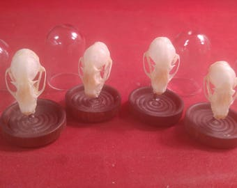 SALE!  Cynopterus brachyotis Bat Skull Glass Dome Display-collectible-macabre-witch-bones