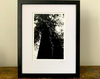 WOOD LAND II - Darkroom Print