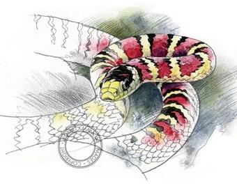 King Snake watercolour - wildlife art - nature print of original artwork