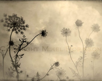 Flower. Flowers. Original Digital Art Photograph. Giclee Print. Wall Art. Wall Decor. CATCHING THE WIND by Mikel Robinson