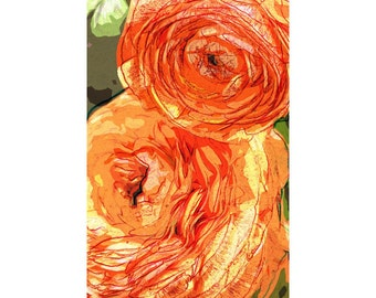 Ranunculus 2 - nature photography