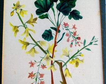 Set of two vintage botanical art prints 1945