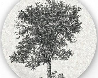 Tree III, vintage engraving plate