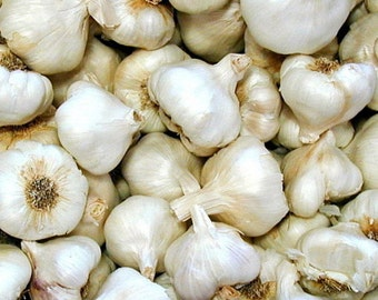 California Softneck Garlic Bulbs - 6 Bulbs