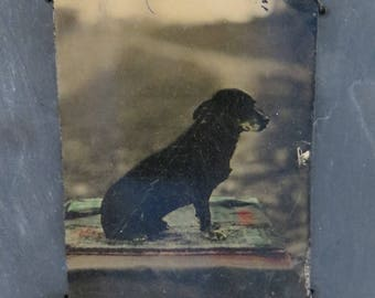 Cute Antique Tintype Photo Small Black Dog Color Touches