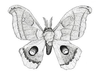 Polyphemus Moth Print