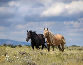Golden Maned Corona with his Black Mare Em of Sand Wash Basin, Wild Horse Photography, canvas print, palomino wild mustang, wild stallion