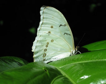White Butterfly - Nature photography by Cindy McMurray