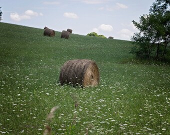 Hay field Digital Backdrop