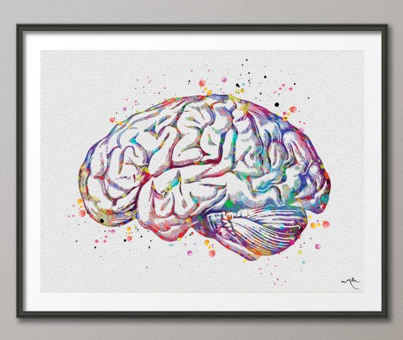 Berühmt Anatomie Des Gehirns Für Kinder Fotos - Menschliche Anatomie ...