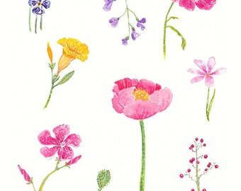 Spring Flowers - Botanical Print of Original Watercolor