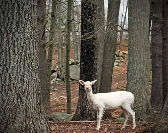 white deer photo deer wall art woodland animal art brown and white deer art nordic art deer forest wall decor wall art deer art prints
